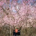Klavierzauber- Frühlingserwachen