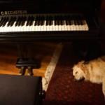 Klavierzauber-Haus Woltersmühlen